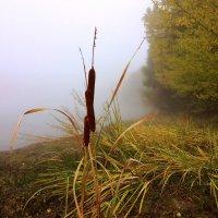 Камыш у озера :: Alexander Andronik