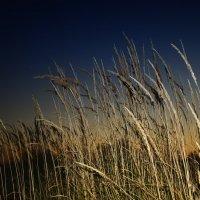На закате... :: Ирина Falcone
