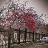 холод :: Ирина Шарафутдинова