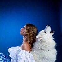 Белый волк :: 100ЗВЕРЕЙ Агентство дрессированных животных