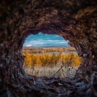 Хорошо, когда из твоей норы прекрасный вид на осенний лес! :: Константин Филякин