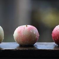 Три яблока... :: Аnatoly Polyakov
