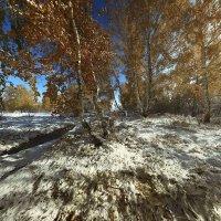 И слышатся песни, осени снежной 3 :: Сергей Жуков
