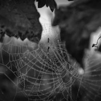 Утренний узор тумана и паука тоже :: catonbox