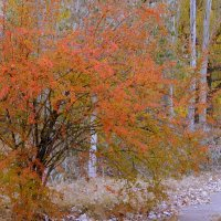 Кружевная осень :: Рина Воржева