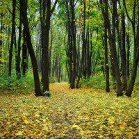 Красавица осень в лес заглянула... :: *MIRA* **