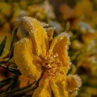 Золотая диадема в ярких блёстках хрусталя :: Дмитрий Проскурин
