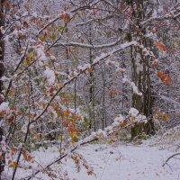 Первый снег---07 :: Владимир Холодный