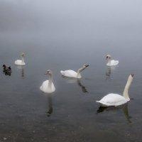 В туманном озере :: Alexander