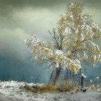 Тяжесть первого снега :: Вадим Губин