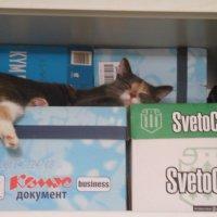 Как удобно спиться! :: Татьяна