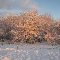 первый снег :: Татьяна Васильева