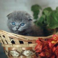 Котя :: Алина Репко