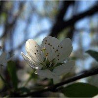 Воспоминание о будущей весне :: muh5257