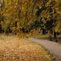 Осеннее... :: tipchik