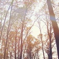Осень :: Alexandra G.