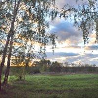 Березовый закат :: Диана Задворкина