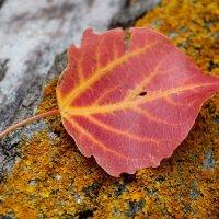 Осенний лист :: Dr. Olver  ( ОлегЪ )