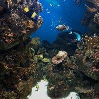 подводное царство :: kuta75 оля оля