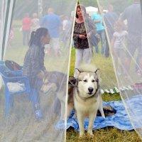 Девицы в светлице На Шахтинской выставке собак. :: Владимир Болдырев