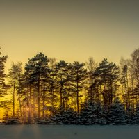 Зимний закат..... :: Александр Сыроватка