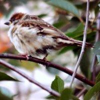 внимание, сейчас вылетит птичка :: Кристина Громова