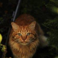 Животные :: Татьяна Тимофеева