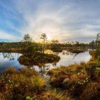 Солнечное гало над болотом. :: Фёдор. Лашков