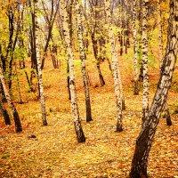 Осенний берёзовый лес :: Андрей Ситников