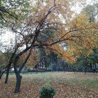 Осень в Московском парке :: Владимир Прокофьев