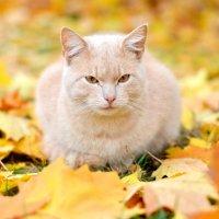 Кошка в осени :: Марина Романова