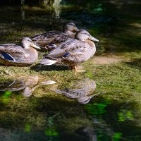 Хорватия, Сплит, национальный парк. :: Сергей Бурлакин