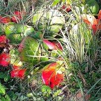 Прощальные краски  осени :: Виталий Селиванов