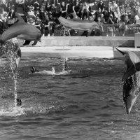 летающие дельфины :: Елена Заичко