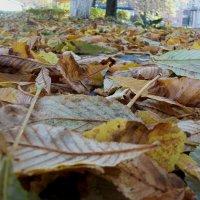 На ковре из жёлтых листьев...(с) :: Галина Бобкина
