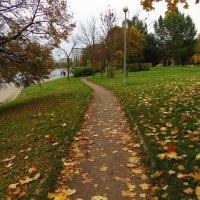 Уже и не золотая осень :: Андрей Лукьянов