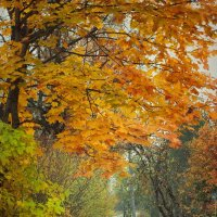 Цветущая осень :: Наталья Ерёменко