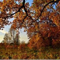 Золото октября :: Вячеслав Минаев