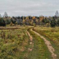 Дорога к лесу :: Павел