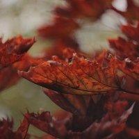Осень :: Ирина ***