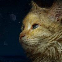 Мистика кошачьих глаз :: Нина