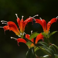 цветы :: linnud