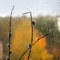 Осенняя верба. :: сергей лебедев