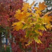Осень :: Галина Дашевская