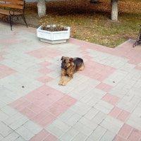 @ :: Дормидонт Иванов