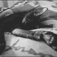 Кот, по кличке  Lex' s. :: Марина Влади-на