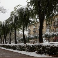 Сибирские пальмы) :: Юрий Оржеховский
