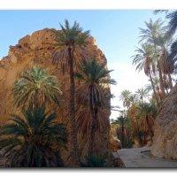 Горный оазис в пустыне. :: Чария Зоя