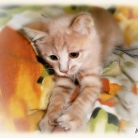 И с кем бы котёнку ещё поиграть...!?? :: Людмила Богданова (Скачко)