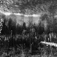 Осень. :: Валерий Молоток